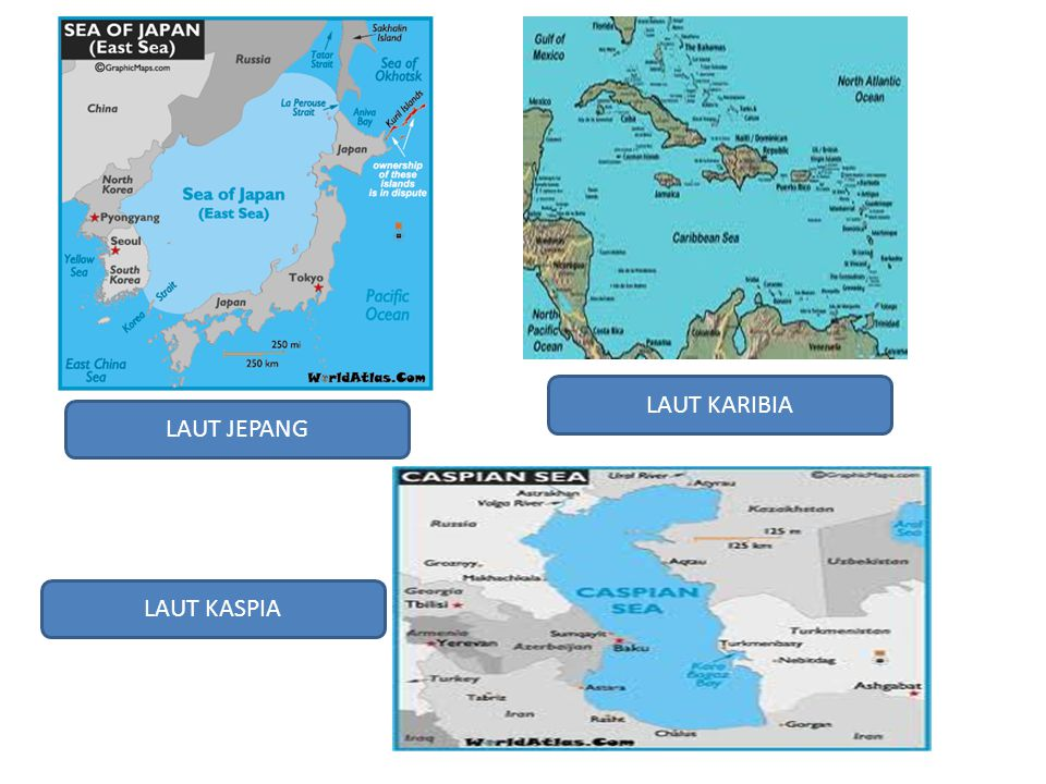LAUT JEPANG LAUT KARIBIA LAUT KASPIA
