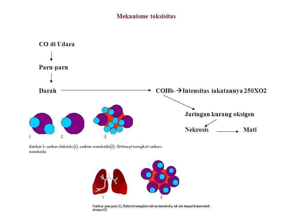 Mekanisme toksisitas CO di Udara Paru-paru DarahCOHb-  Intensitas iakatannya 250XO2 Jaringan kurang oksigen NekrosisMati
