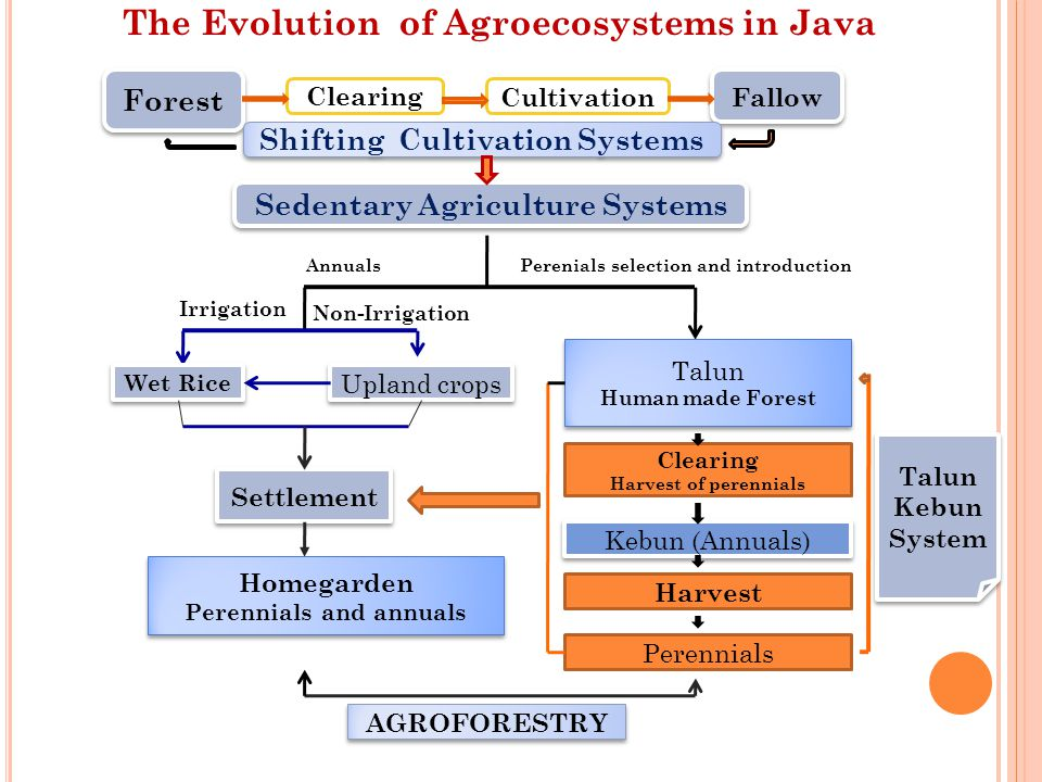 The Evolution of Agroecosystems in Java Forest ClearingCultivation Fallow Shifting Cultivation Systems Sedentary Agriculture Systems AnnualsPerenials