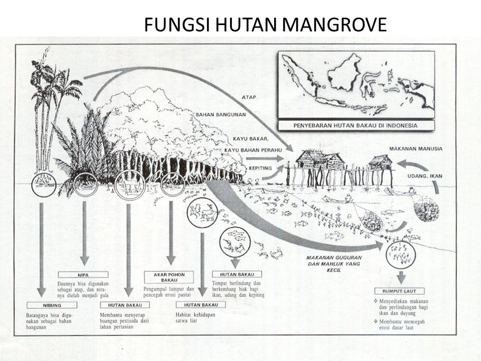 FUNGSI HUTAN MANGROVE
