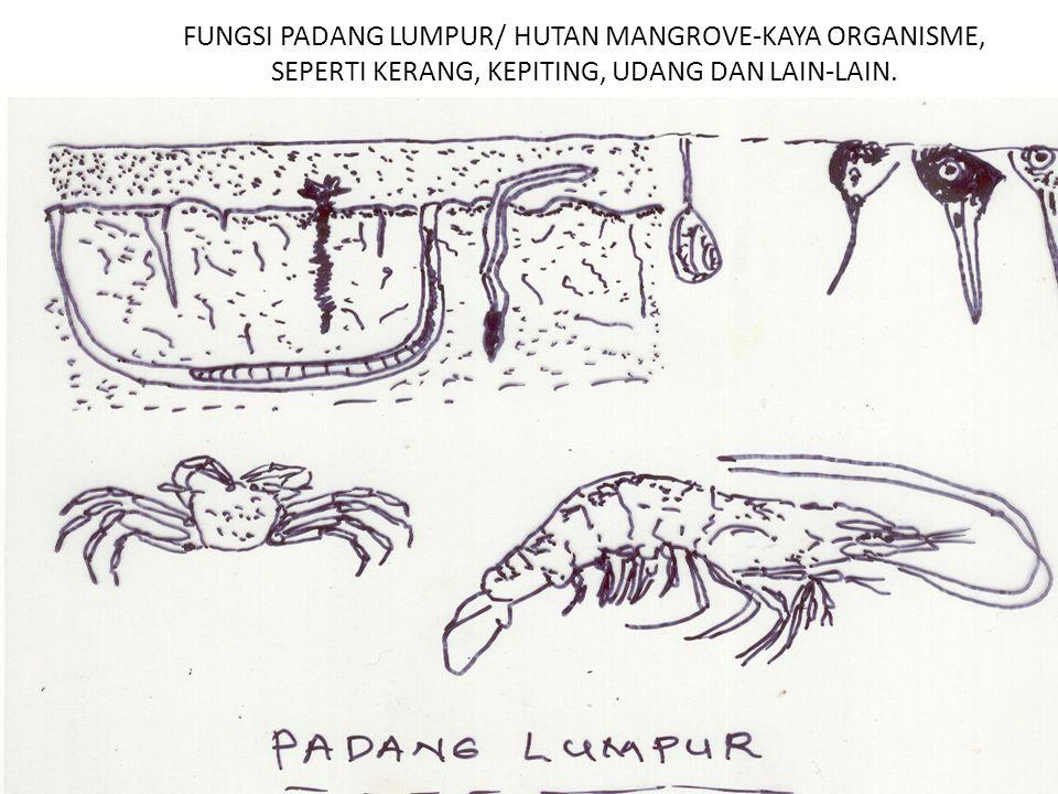 FUNGSI PADANG LUMPUR/ HUTAN MANGROVE-KAYA ORGANISME, SEPERTI KERANG, KEPITING, UDANG DAN LAIN-LAIN.
