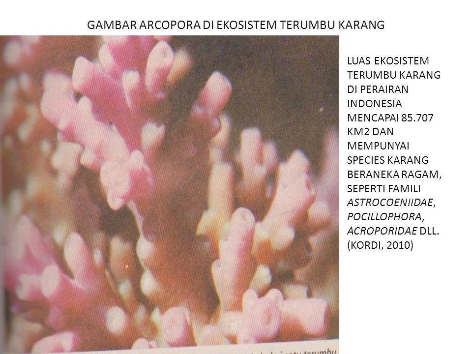 GAMBAR ARCOPORA DI EKOSISTEM TERUMBU KARANG LUAS EKOSISTEM TERUMBU KARANG DI PERAIRAN INDONESIA MENCAPAI 85.707 KM2 DAN MEMPUNYAI SPECIES KARANG BERAN