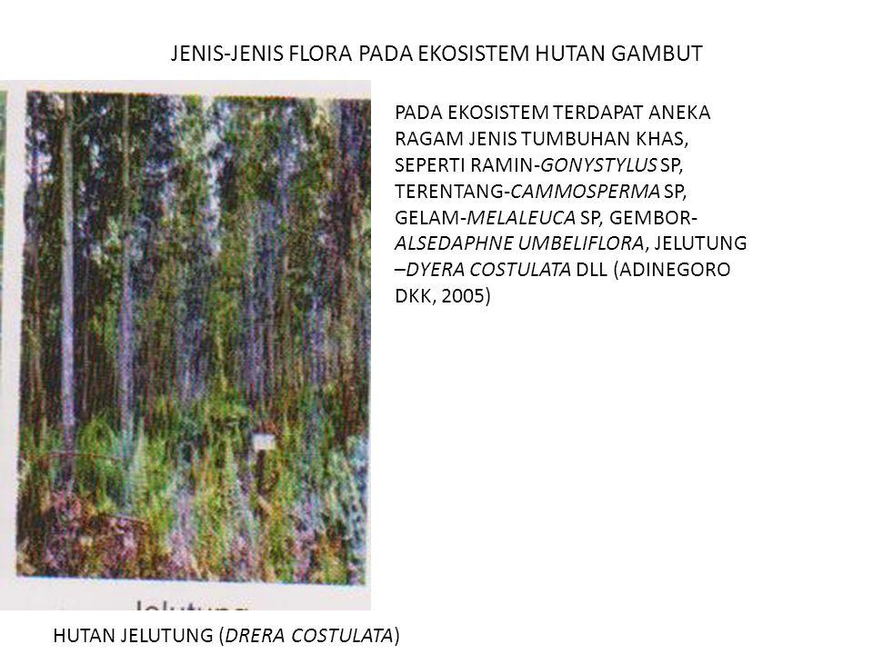 JENIS-JENIS FLORA PADA EKOSISTEM HUTAN GAMBUT HUTAN JELUTUNG (DRERA COSTULATA) PADA EKOSISTEM TERDAPAT ANEKA RAGAM JENIS TUMBUHAN KHAS, SEPERTI RAMIN-