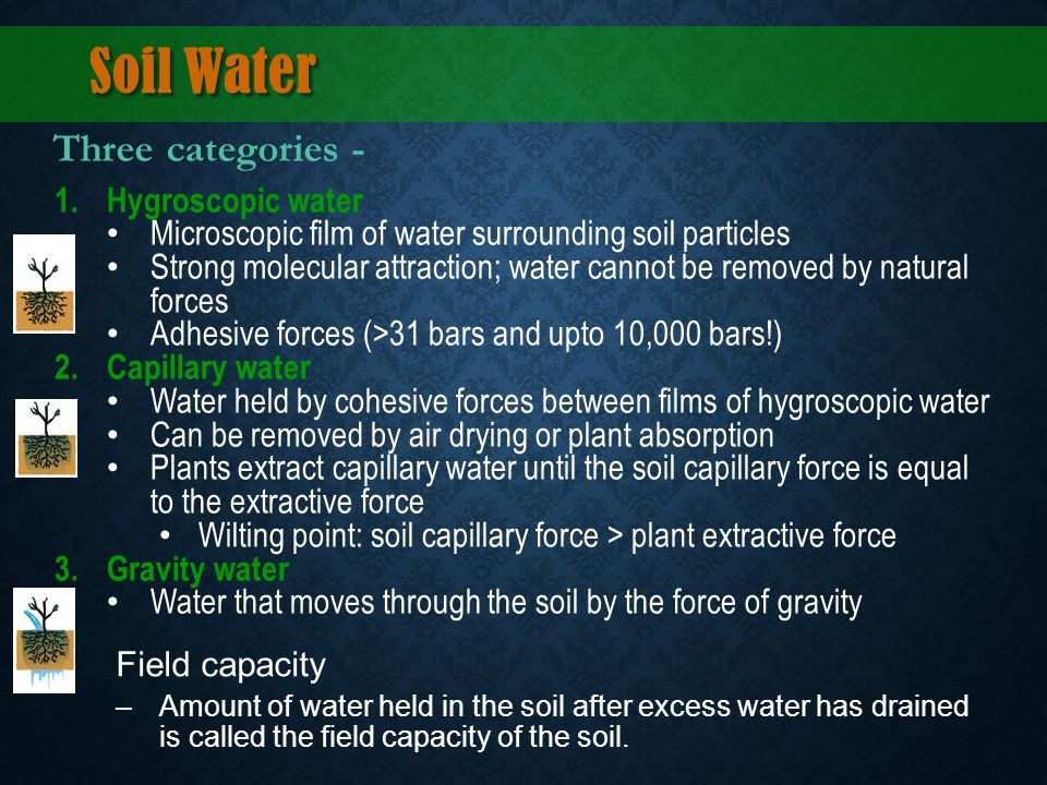 Soil Water 1.Hygroscopic water Microscopic film of water surrounding soil particles Strong molecular attraction; water cannot be removed by natural fo