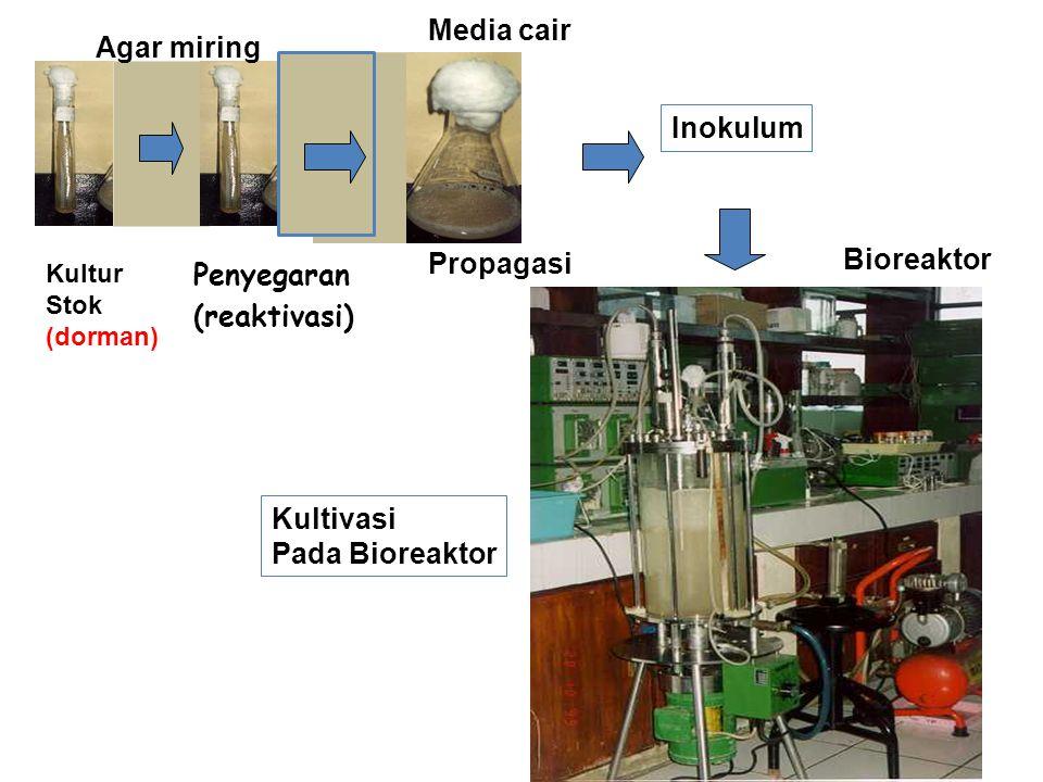 Penting diperhatikan pada Pengembangan Inokulum : Resiko kontaminasi cukup besar  harus dilakukan secara aseptis & dilakukan pengujian kemurnian kultur (a.l cek dg mikroskop) Contoh Penyiapan Inokulum Bakteri Clostridium sp (produksi aseton-butanol) TahapKondisi KulturMedia I II III IV V Rekonstitusi isolat ampul Inokulasi ke media 600 ml Inokulasikan 90 ml ke dlm 3 L (labu erlenmeyer 4 L) Inokulasi ke dalam bioreaktor 25.000 L Inokulasi ke dalam bioreaktor 300.000 – 2.500.000 L (0,5 – 3 %) Potato Glucose Broth (pepton) Gula 4 % (Molase) (NH 4 ) 2 SO 4 5 %, CaCO 3 6 %, fosfat 0,2 % Idem Thp II Idem Thp II (6 % gula) Idem Thp IV ditambah amonia