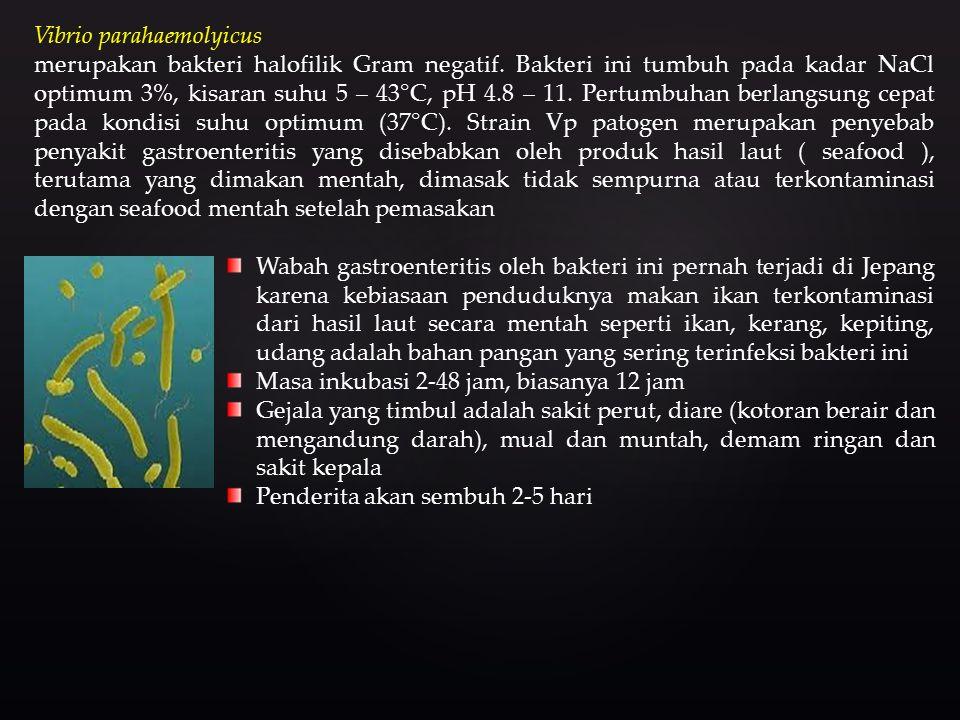 Vibrio parahaemolyicus merupakan bakteri halofilik Gram negatif.
