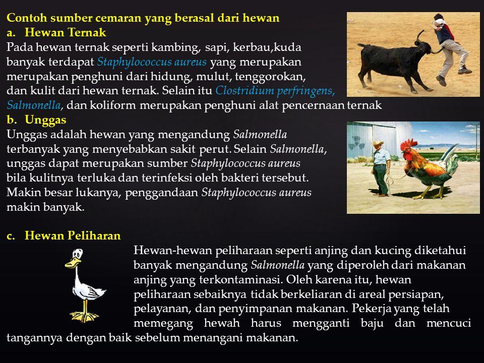 Contoh sumber cemaran yang berasal dari hewan a.Hewan Ternak Pada hewan ternak seperti kambing, sapi, kerbau,kuda banyak terdapat Staphylococcus aureus yang merupakan merupakan penghuni dari hidung, mulut, tenggorokan, dan kulit dari hewan ternak.