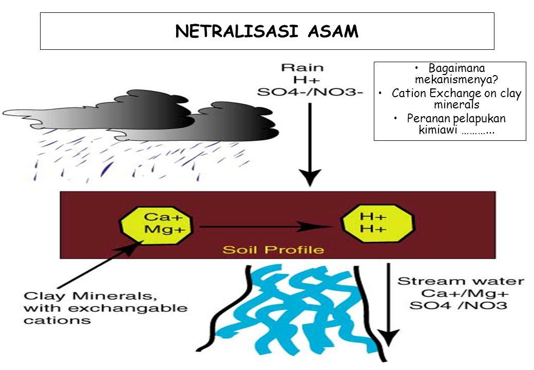30 NETRALISASI ASAM Bagaimana mekanismenya? Cation Exchange on clay minerals Peranan pelapukan kimiawi ………...