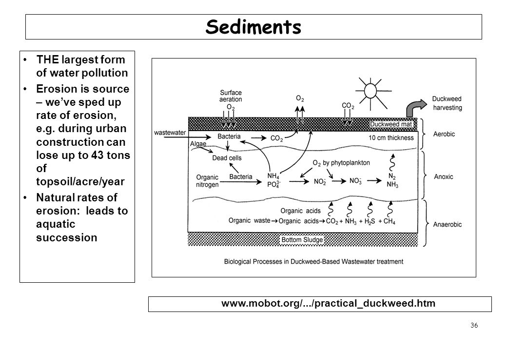 36 Sediments THE largest form of water pollution Erosion is source – we've sped up rate of erosion, e.g. during urban construction can lose up to 43 t