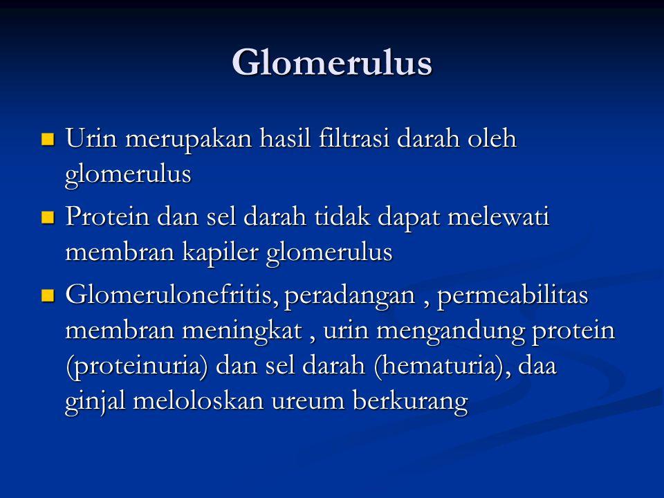 Glomerulus Urin merupakan hasil filtrasi darah oleh glomerulus Urin merupakan hasil filtrasi darah oleh glomerulus Protein dan sel darah tidak dapat melewati membran kapiler glomerulus Protein dan sel darah tidak dapat melewati membran kapiler glomerulus Glomerulonefritis, peradangan, permeabilitas membran meningkat, urin mengandung protein (proteinuria) dan sel darah (hematuria), daa ginjal meloloskan ureum berkurang Glomerulonefritis, peradangan, permeabilitas membran meningkat, urin mengandung protein (proteinuria) dan sel darah (hematuria), daa ginjal meloloskan ureum berkurang