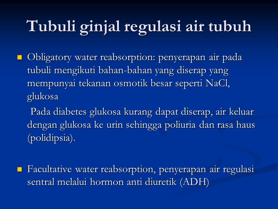 Tubuli ginjal regulasi air tubuh Obligatory water reabsorption: penyerapan air pada tubuli mengikuti bahan-bahan yang diserap yang mempunyai tekanan osmotik besar seperti NaCl, glukosa Obligatory water reabsorption: penyerapan air pada tubuli mengikuti bahan-bahan yang diserap yang mempunyai tekanan osmotik besar seperti NaCl, glukosa Pada diabetes glukosa kurang dapat diserap, air keluar dengan glukosa ke urin sehingga poliuria dan rasa haus (polidipsia).