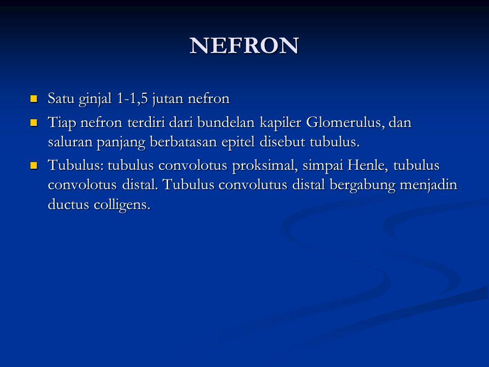 NEFRON Satu ginjal 1-1,5 jutan nefron Satu ginjal 1-1,5 jutan nefron Tiap nefron terdiri dari bundelan kapiler Glomerulus, dan saluran panjang berbatasan epitel disebut tubulus.