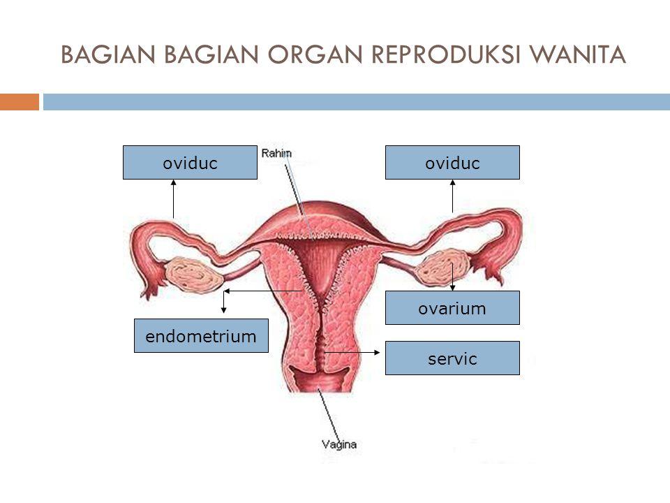 BAGIAN BAGIAN ORGAN REPRODUKSI WANITA servic oviduc ovarium endometrium oviduc