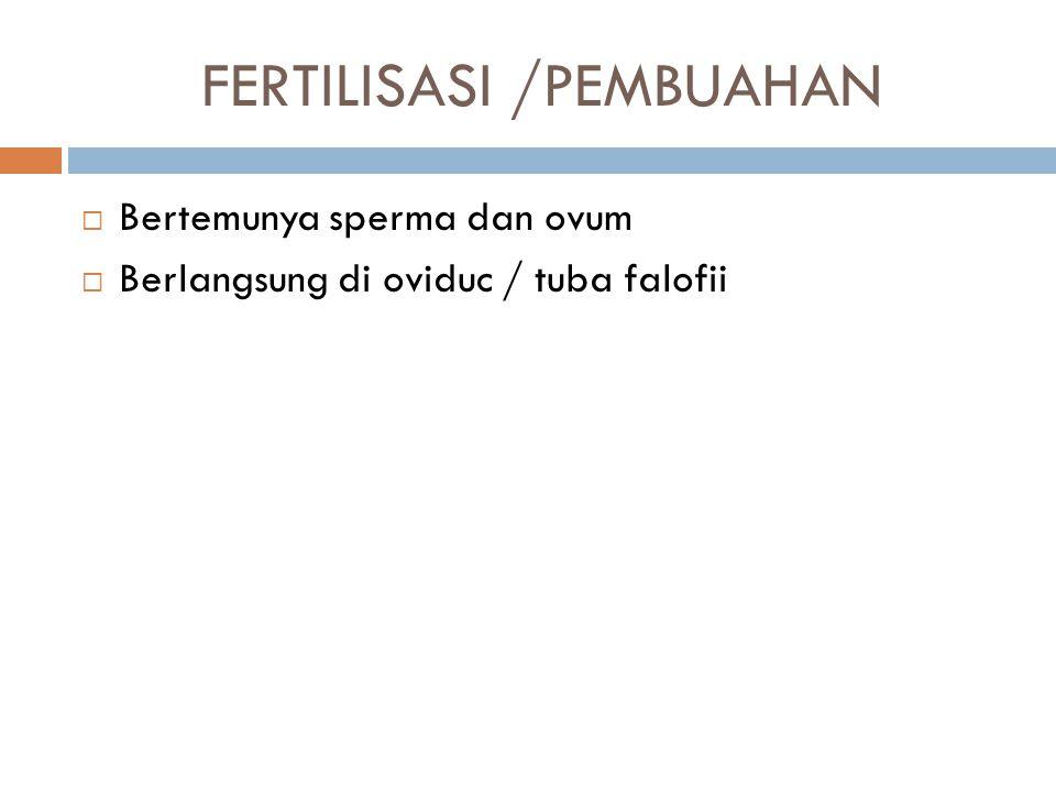 FERTILISASI /PEMBUAHAN  Bertemunya sperma dan ovum  Berlangsung di oviduc / tuba falofii