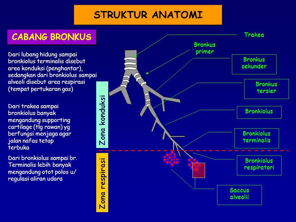 Trakea Bronkus primer Bronkus sekunder Bronkiolus terminalis Saccus alveolii Zona konduksi Zona respirasi Bronkus tersier Bronkiolus Bronkiolus respiratori Dari lubang hidung sampai bronkiolus terminalis disebut area konduksi (penghantar), sedangkan dari bronkiolus sampai alveoli disebut area respirasi (tempat pertukaran gas) Dari bronkiolus sampai br.