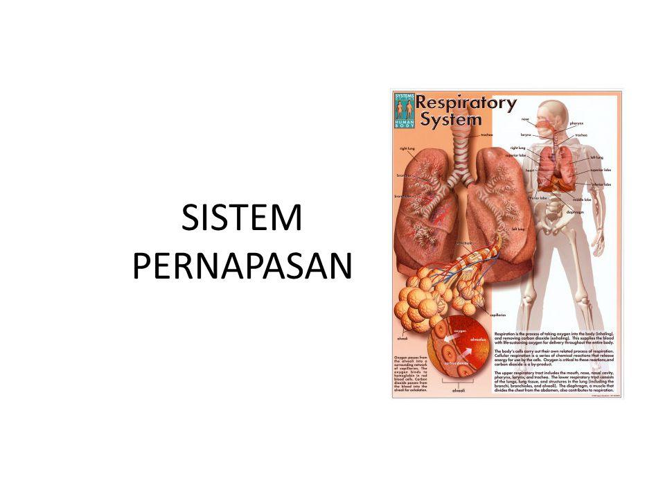 Kontrol kimia Saat berolahraga, terjadi peningkatan CO 2 yang merupakan sisa hasil metabolisme.