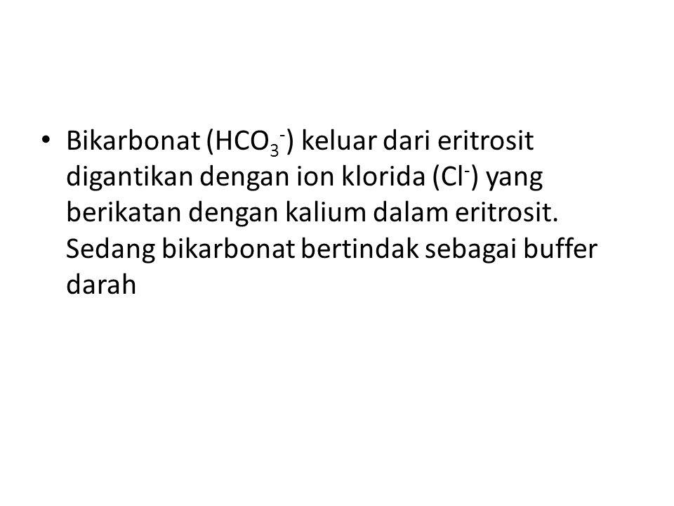 Bikarbonat (HCO 3 - ) keluar dari eritrosit digantikan dengan ion klorida (Cl - ) yang berikatan dengan kalium dalam eritrosit. Sedang bikarbonat bert