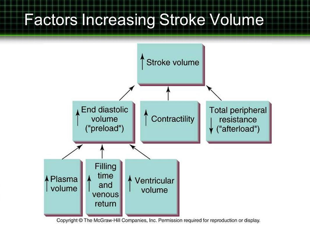 Factors Increasing Stroke Volume