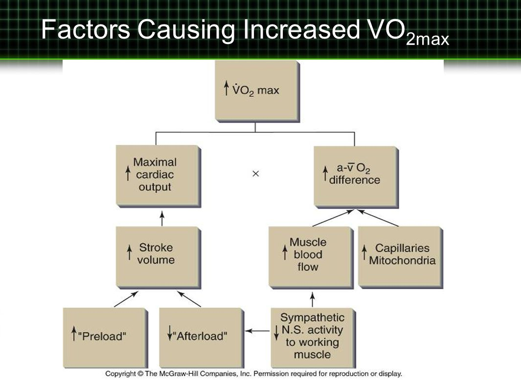 Factors Causing Increased VO 2max
