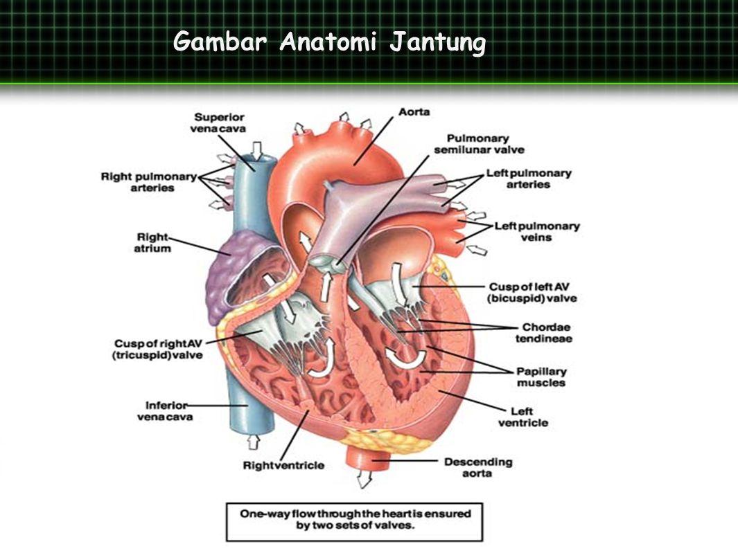 Perbedaan Dimensi Jantung