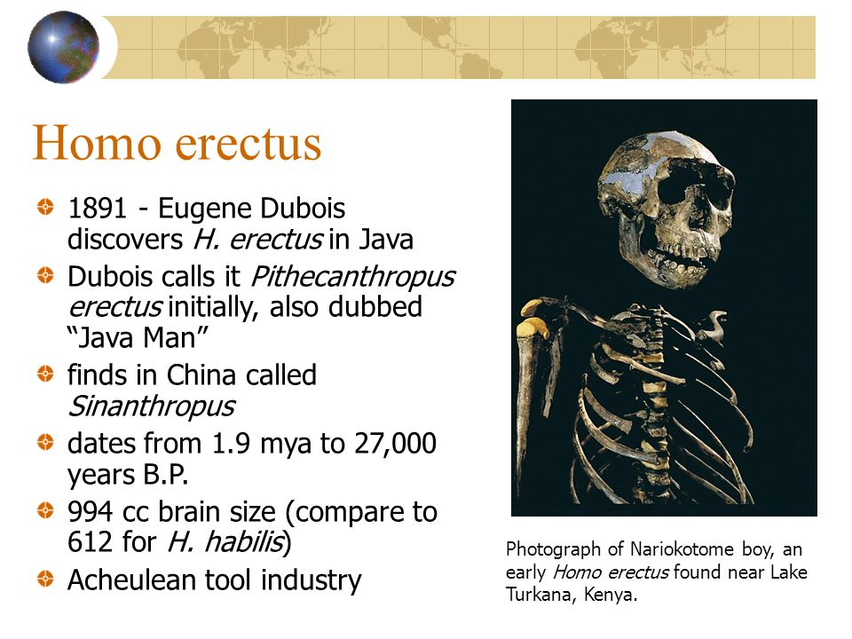 "Homo erectus 1891 - Eugene Dubois discovers H. erectus in Java Dubois calls it Pithecanthropus erectus initially, also dubbed ""Java Man"" finds in Chin"