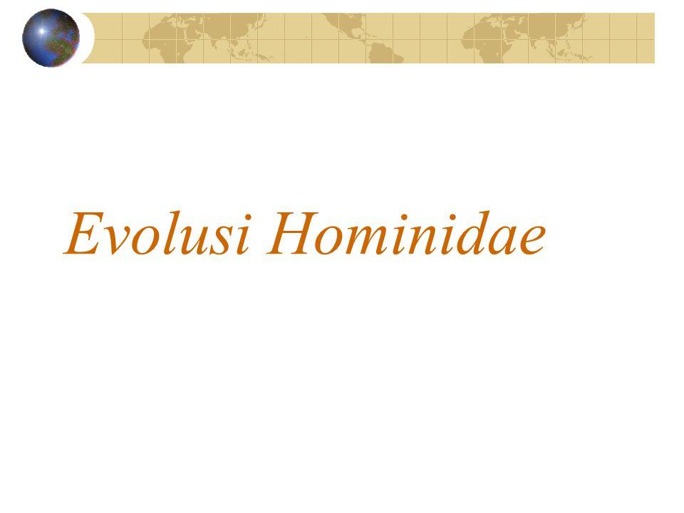 Evolusi Hominidae