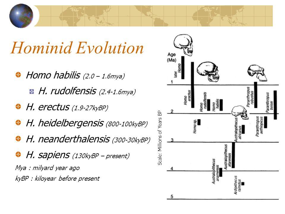 Hominid Evolution Homo habilis (2.0 – 1.6mya) H.rudolfensis (2.4-1.6mya) H.
