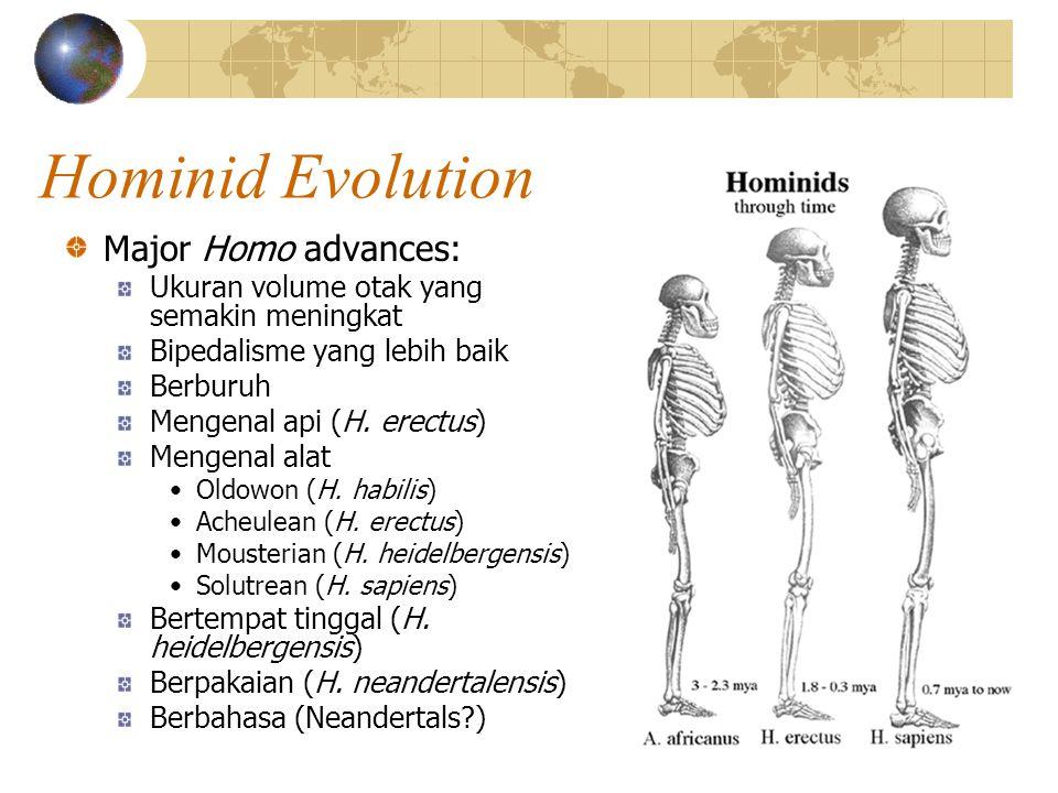 Hominid Evolution Major Homo advances: Ukuran volume otak yang semakin meningkat Bipedalisme yang lebih baik Berburuh Mengenal api (H.
