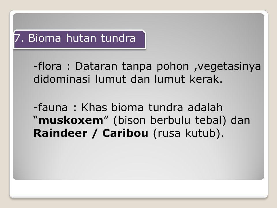 7.Bioma hutan tundra -flora : Dataran tanpa pohon,vegetasinya didominasi lumut dan lumut kerak.