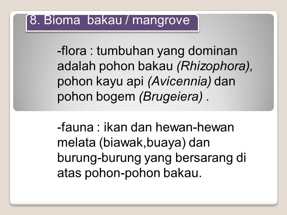 8. Bioma bakau / mangrove -flora : tumbuhan yang dominan adalah pohon bakau (Rhizophora), pohon kayu api (Avicennia) dan pohon bogem (Brugeiera). -fau