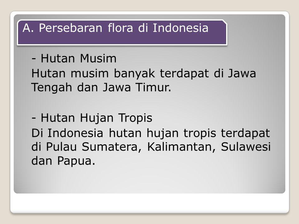 A. Persebaran flora di Indonesia - Hutan Musim Hutan musim banyak terdapat di Jawa Tengah dan Jawa Timur. - Hutan Hujan Tropis Di Indonesia hutan huja