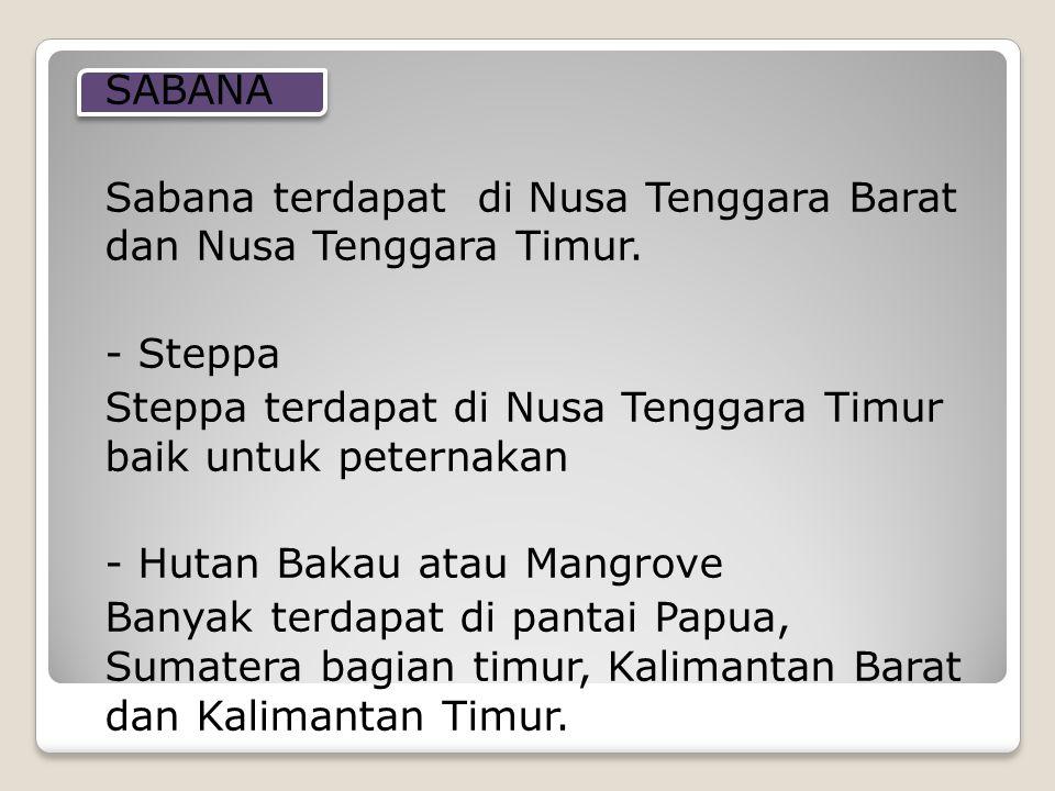 SABANA Sabana terdapat di Nusa Tenggara Barat dan Nusa Tenggara Timur. - Steppa Steppa terdapat di Nusa Tenggara Timur baik untuk peternakan - Hutan B