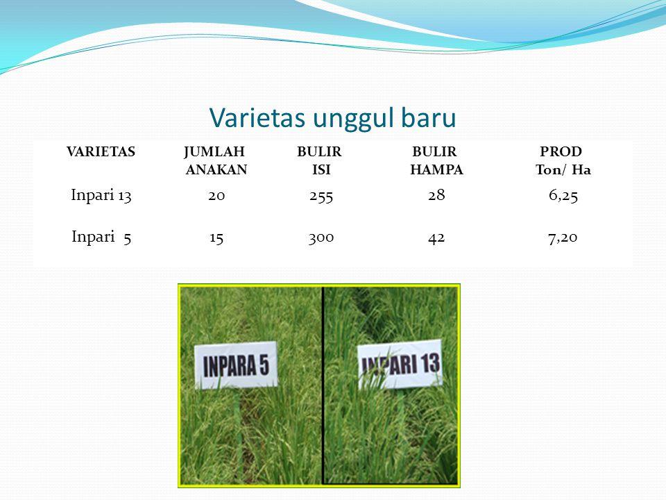 Varietas unggul baru VARIETASJUMLAH ANAKAN BULIR ISI BULIR HAMPA PROD Ton/ Ha Inpari 1320255286,25 Inpari 515300427,20