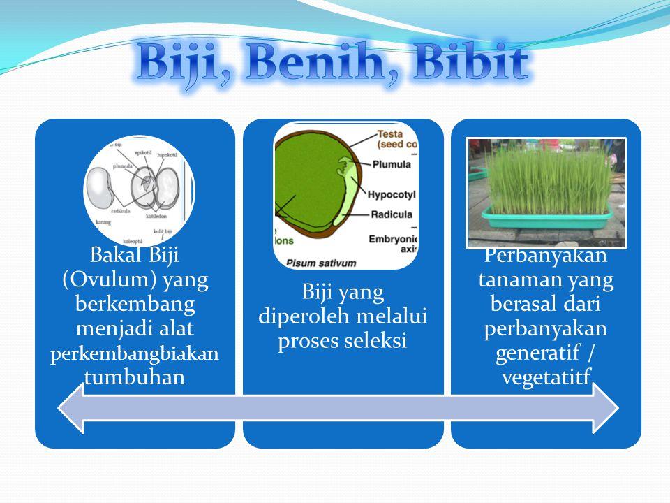 Bakal Biji (Ovulum) yang berkembang menjadi alat perkembangbiak an tumbuhan Biji yang diperoleh melalui proses seleksi Perbanyakan tanaman yang berasal dari perbanyakan generatif / vegetatitf