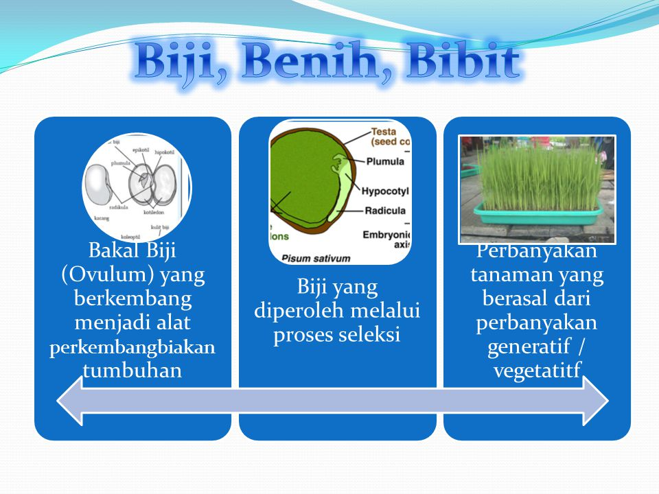 Biji : media penyebaran kelangsungan hidup tanaman Benih : Hasil seleksi dari perkembangbiakan generatif maupun vegetatif Biji diartikan hasil panen untuk konsumsi Benih diartikan hasil panen untuk tujuan budidaya