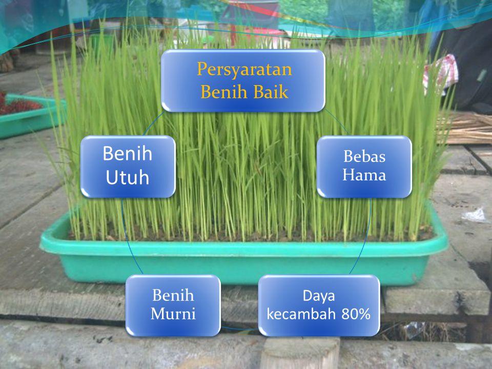 Perkecambahan benih 1.Penyerapan air oleh benih, melunaknya kulit benih dan hidrasi dari protoplasma 2.Terjadi kegiatan-kegiatan sel dan enzim-enzim serta naiknya tingkat respirasi benih 3.Penguraian cadangan makanan 4.Asimilasi dari cadangan makanan pada daerah meristematik untuk menghasilkan energi bagi pertumbuhan sel-sel baru 5.Pertumbuhan kecambah melalui proses pembelahan, pembesaran dan pembagian sel-sel pada titik tumbuh.