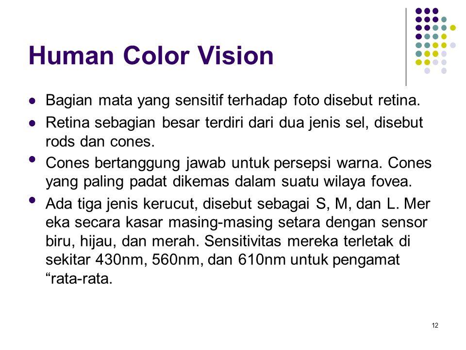 Human Color Vision Bagian mata yang sensitif terhadap foto disebut retina. Retina sebagian besar terdiri dari dua jenis sel, disebut rods dan cones. C