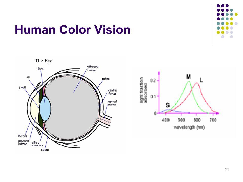 Human Color Vision 13