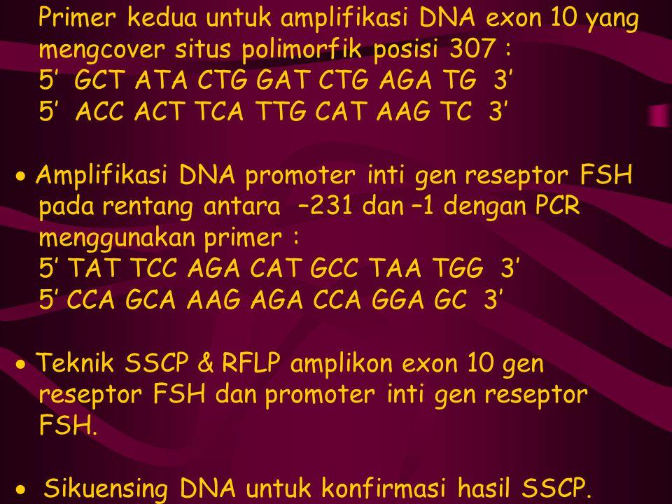 Primer kedua untuk amplifikasi DNA exon 10 yang mengcover situs polimorfik posisi 307 : 5' GCT ATA CTG GAT CTG AGA TG 3' 5' ACC ACT TCA TTG CAT AAG TC