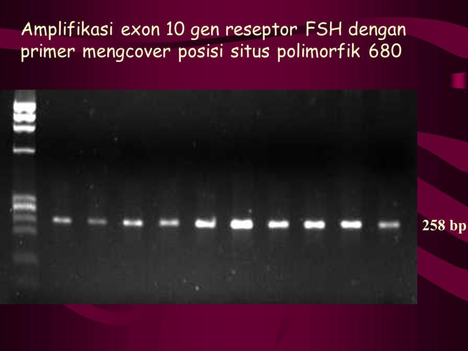 Amplifikasi exon 10 gen reseptor FSH dengan primer mengcover posisi situs polimorfik 680 258 bp