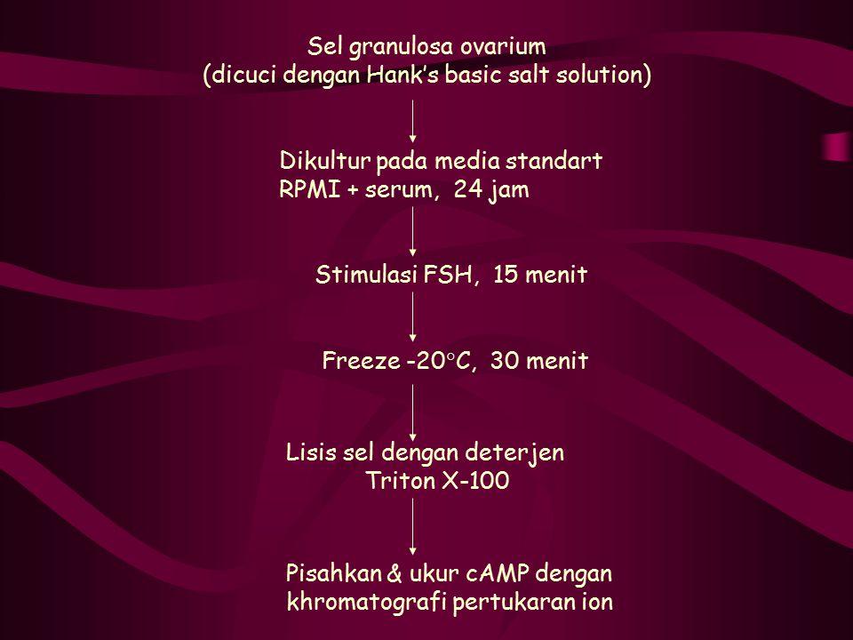 Sel granulosa ovarium (dicuci dengan Hank's basic salt solution)  Dikultur pada media standart RPMI + serum, 24 jam Stimulasi FSH, 15 menit Freeze -2