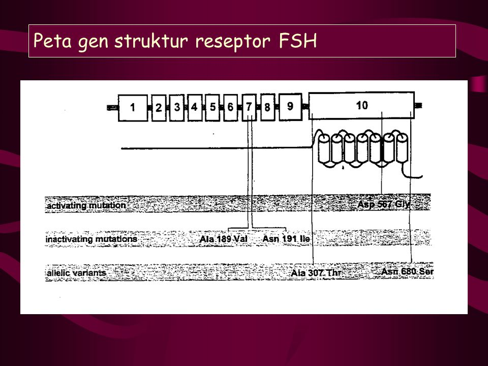 Rencana kerja tahun ke III Subtopik I Uji sensitifitas isoform FSH terhadap stimulasi FSH in vitro.