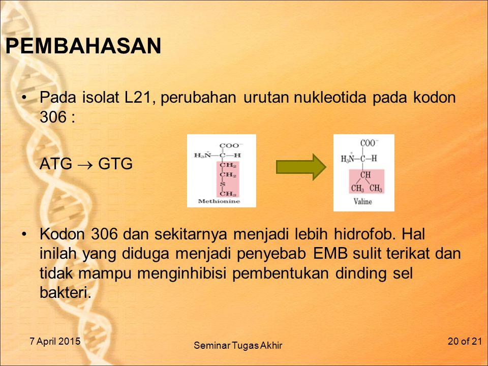 PEMBAHASAN Pada isolat L21, perubahan urutan nukleotida pada kodon 306 : ATG  GTG Kodon 306 dan sekitarnya menjadi lebih hidrofob. Hal inilah yang di