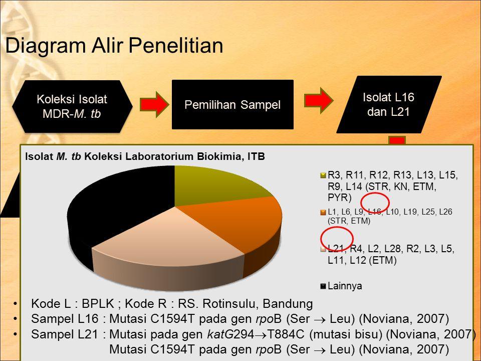 Diagram Alir Penelitian 7 April 2015 of 21 9 Koleksi Isolat MDR-M.