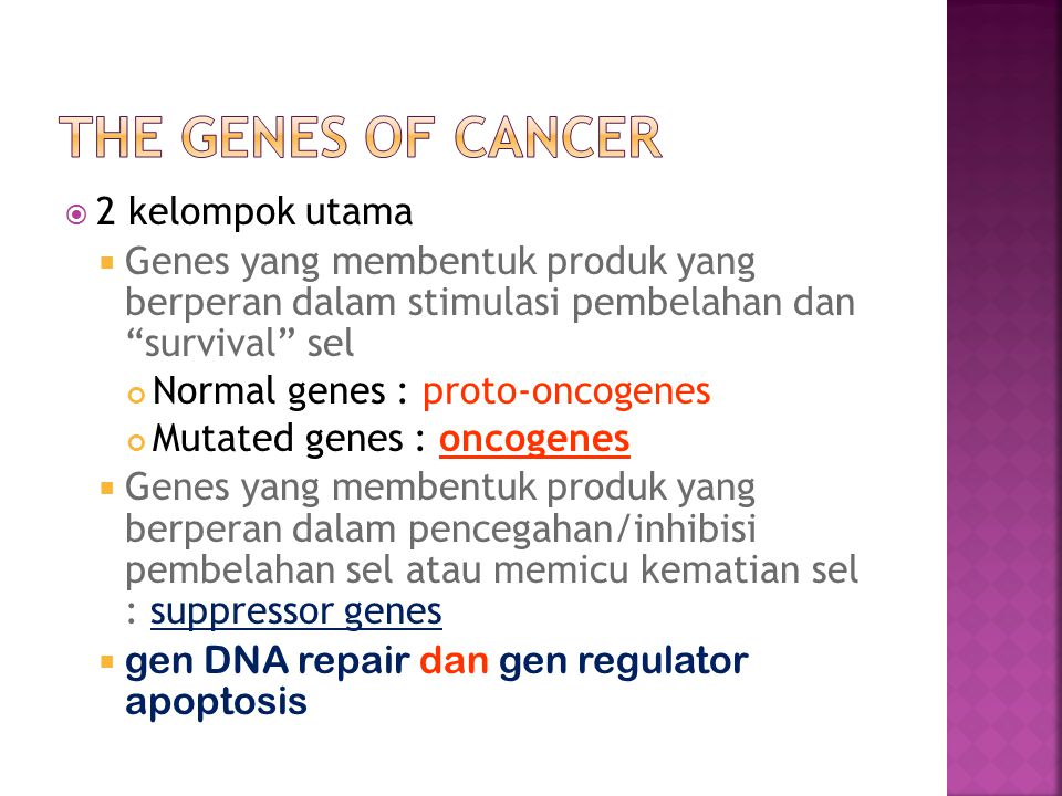  2 kelompok utama  Genes yang membentuk produk yang berperan dalam stimulasi pembelahan dan survival sel Normal genes : proto-oncogenes Mutated genes : oncogenes  Genes yang membentuk produk yang berperan dalam pencegahan/inhibisi pembelahan sel atau memicu kematian sel : suppressor genes  gen DNA repair dan gen regulator apoptosis