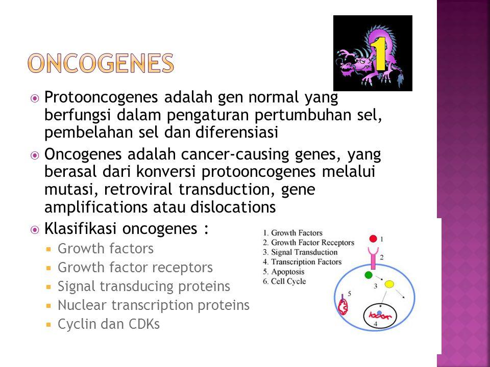  Protooncogenes adalah gen normal yang berfungsi dalam pengaturan pertumbuhan sel, pembelahan sel dan diferensiasi  Oncogenes adalah cancer-causing genes, yang berasal dari konversi protooncogenes melalui mutasi, retroviral transduction, gene amplifications atau dislocations  Klasifikasi oncogenes :  Growth factors  Growth factor receptors  Signal transducing proteins  Nuclear transcription proteins  Cyclin dan CDKs