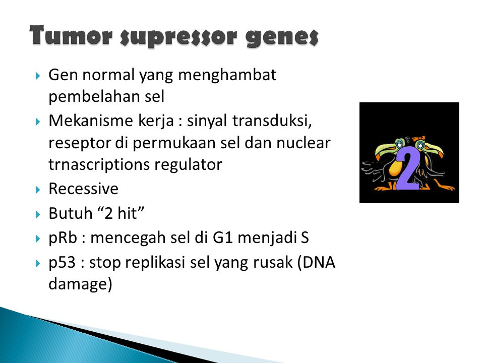  Gen normal yang menghambat pembelahan sel  Mekanisme kerja : sinyal transduksi, reseptor di permukaan sel dan nuclear trnascriptions regulator  Re