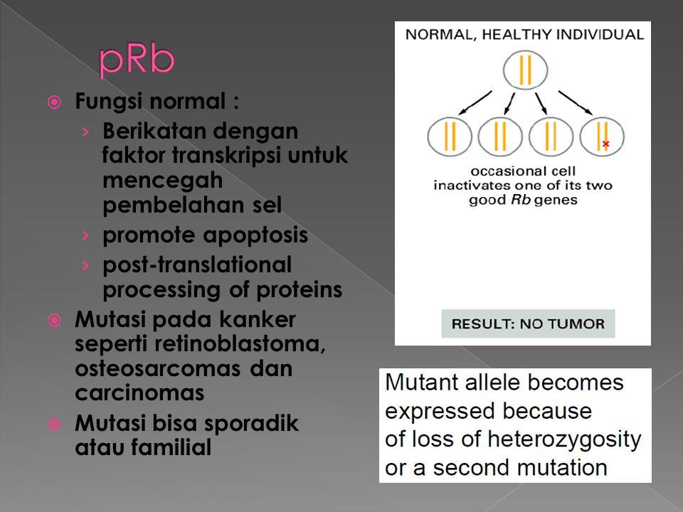  Fungsi normal : › Berikatan dengan faktor transkripsi untuk mencegah pembelahan sel › promote apoptosis › post-translational processing of proteins