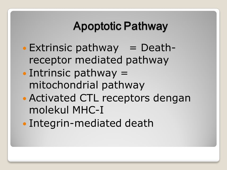 Apoptotic Pathway Extrinsic pathway = Death- receptor mediated pathway Intrinsic pathway = mitochondrial pathway Activated CTL receptors dengan moleku