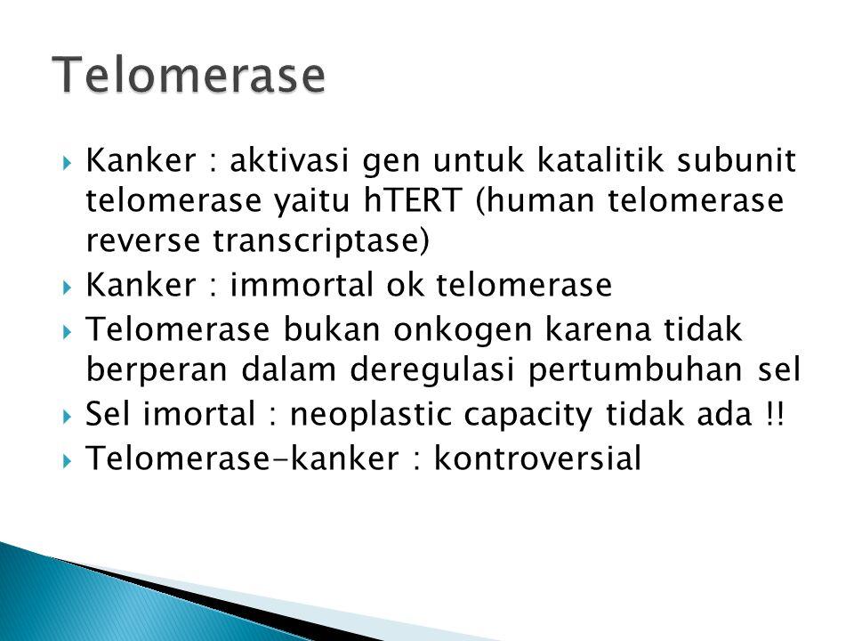  Kanker : aktivasi gen untuk katalitik subunit telomerase yaitu hTERT (human telomerase reverse transcriptase)  Kanker : immortal ok telomerase  Telomerase bukan onkogen karena tidak berperan dalam deregulasi pertumbuhan sel  Sel imortal : neoplastic capacity tidak ada !.